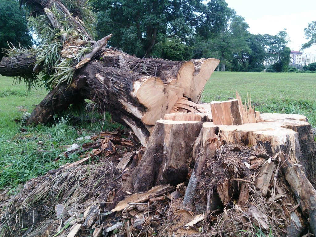 Downed Tree on Main Street Attleboro MA