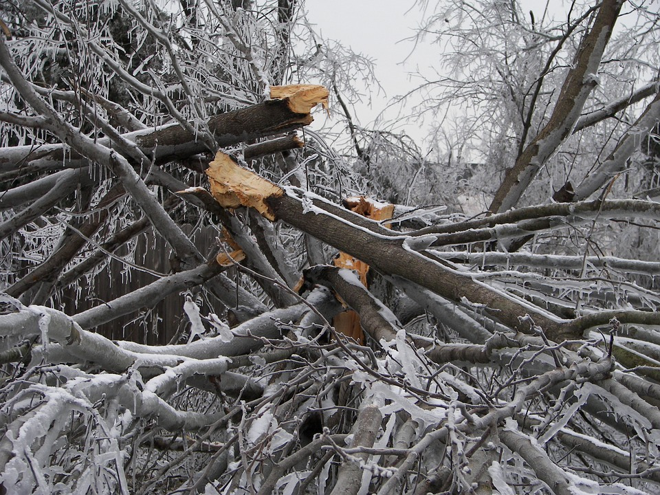 Tree downed by bad storm on Feb. 2017